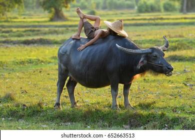 Children sleeping on buffalo