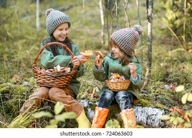 Children walking in the forest and gather mushrooms.