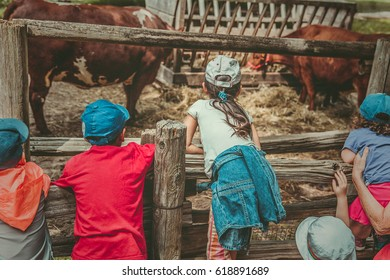 Children watching the cows fed on old isolated farm