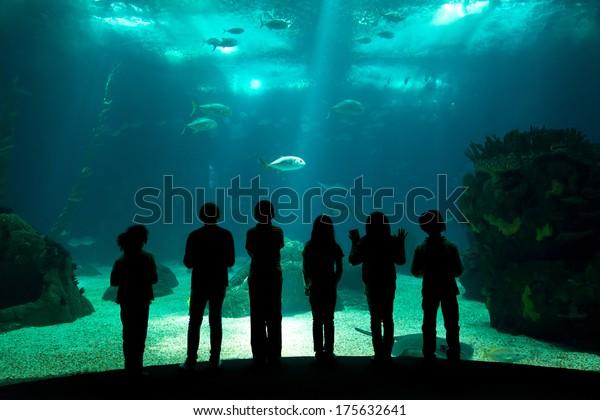 Enfants dans un parc aquatique regardant les poissons à travers le verre