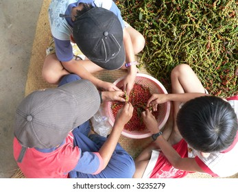 Children Working with Peppers