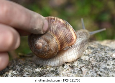 Children's fingers touch the snail shell