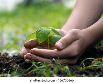 Children's hands embrace a small green plant young germ. The concept of ecology, environmental protection