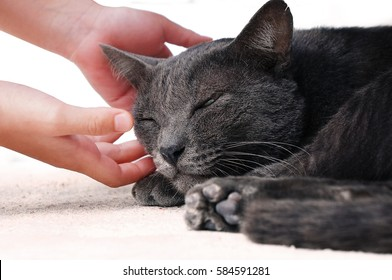 Children's hands are helping the stray cat.