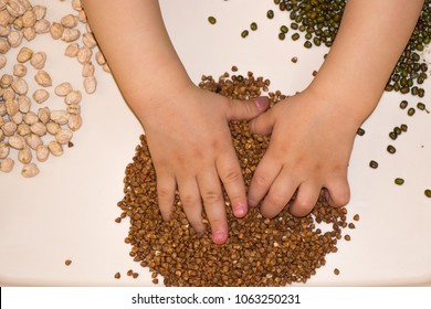 children's hands touch the croup of Montessori