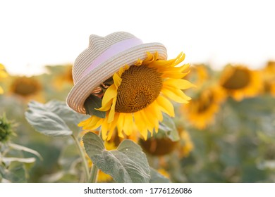 Children's hat on a flower of a sunflower against a blurred field