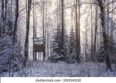 Childrens' self-built hut between trees in foggy forest at winter. Sunlight behind fog.