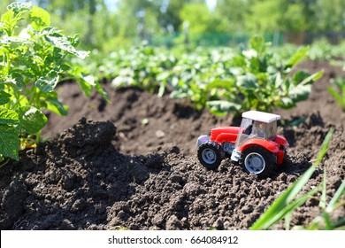 Childrens Tractor In A Potato Field