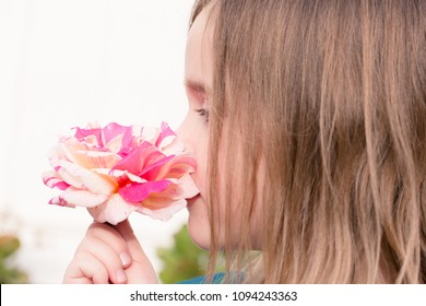 Child's hand is holding a beautiful pink and white blossoming spring rose.