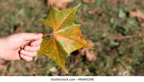 Child's Hand Holding Brightly Colored Green And Orange Fall Leaf On A Farm In The Mountains Of South West Virginia