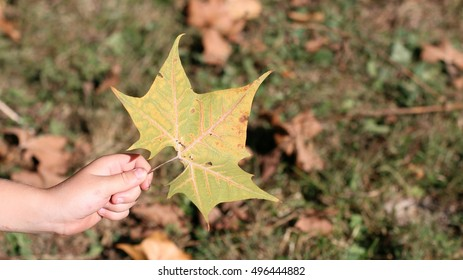 Child's Hand Holding Green And Orange Colored Fall Leaf Against Grass And Dead Brown Fallen Leaves On A Farm In The Mountains Of South East Virginia