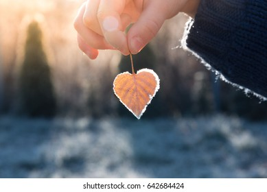 Child's hand holding a heart shaped leaf with a frost on its edges illuminated by warm light of setting sun