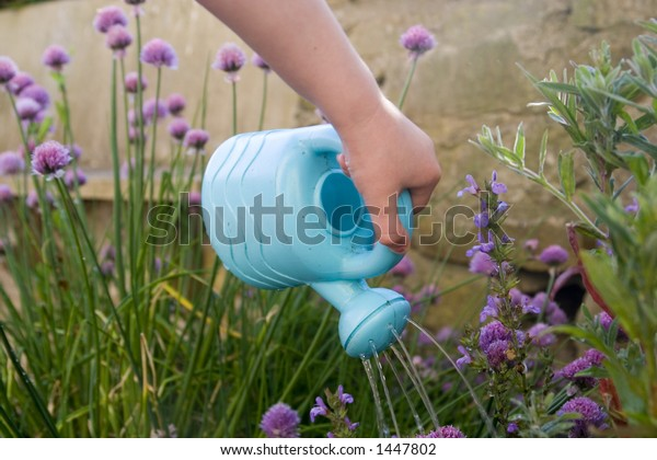 Childs Hand Small Plastic Blue Watering Stock Photo Edit Now 1447802