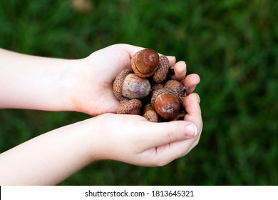 Child's hands with acorns, on a bright green background.