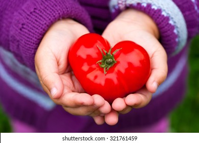 Child's hands holding a heart shaped tomato.