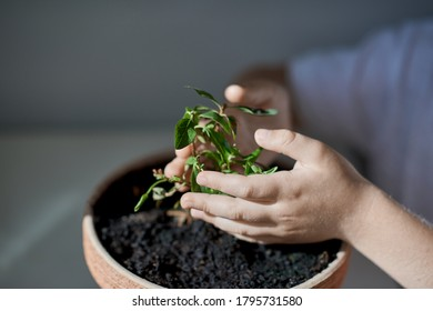 The child's hands are protecting the plant.