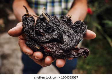chile ancho, mexican dried chili pepper, Assortment of chili peppers in farmer Hands in Mexico
