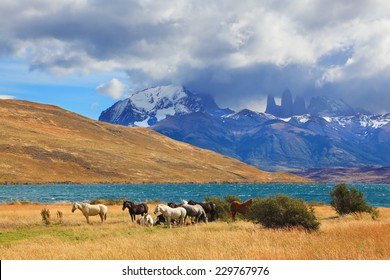Chilean Andes. Fabulous lake Laguna Azul. Distance are seen three rocks Torres del Paine.  On the lake herd of horses grazing