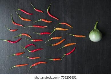 chili and acacia same sperm swimming toward the egg concept,Human Sperm to Human Egg.