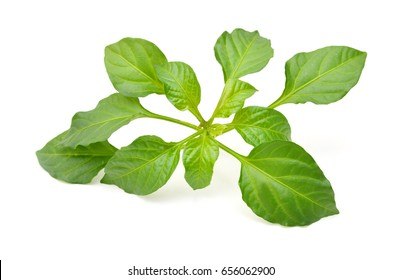 Chili pepper plant on white background