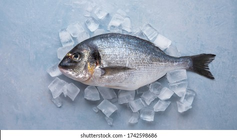 chilled raw Dorado fish on ice on a blue background. Top view and copy space