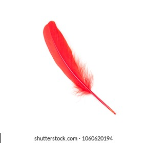 Chilli red feather on a white background