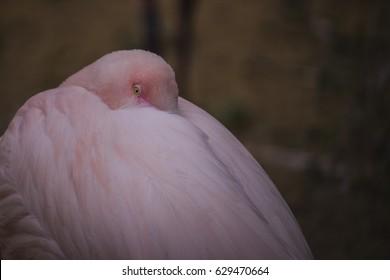 chilling flamingo