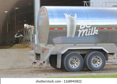 CHILLIWACK, BC/Canada - August 31, 2018: A dairy cow watches as a BC milk truck parks beside her barn in Chilliwack, British Columbia, Canada on August 31, 2018.