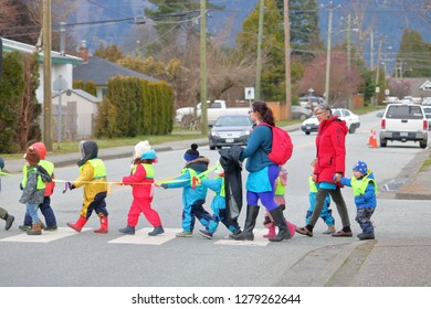 CHILLIWACK, BC/Canada - January 8, 2019: Adults guide pre-school children across a crosswalk using a safety line in  Chilliwack, BC, Canada on January 8, 2019.