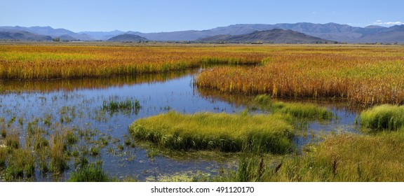 Chilly Slough Wetland near Mackay, Idaho