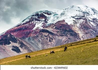 Chimborazo vulcano in Ecuador