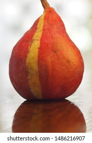 Chimera Pear closeup. A chimera is a genetic freak of nature. This is a Red Bartlett pear with a part that is regular green Bartlett pear. It is a natural mutation.