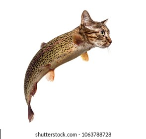 chimera with Rainbow trout and kitten's head swimming against white background