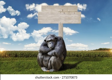 chimpanzee arms crossed, serious face, sitting in front of a blank wooden sign. background a green landscape with blue sky and clouds