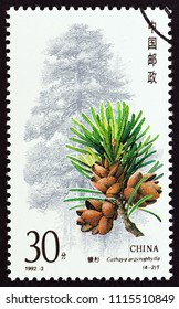 """CHINA - CIRCA 1992: A stamp printed in China from the """"Conifers"""" issue shows Cathaya argyrophylla, circa 1992."""