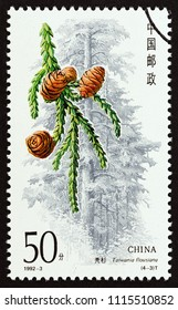 """CHINA - CIRCA 1992: A stamp printed in China from the """"Conifers"""" issue shows Taiwania flousiana, circa 1992."""