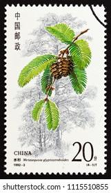 """CHINA - CIRCA 1992: A stamp printed in China from the """"Conifers"""" issue shows Metasequoia glyptostroboides, circa 1992."""