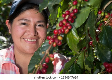 Chinacla, La Paz/Honduras. December 4 2018. Happy woman in a coffee farm with a branch full of cherries