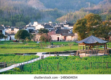 China's Ancient Villages in Southern Anhui - Xidi is listed as a World Cultural Heritage by UNESCO.The white walls and black tiles and the rapeseed in the sun make up a beautiful landscape.