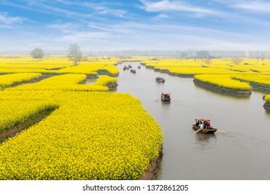 China's Jiangsu, rural rapeseed farmland, rape blossoms. The boat in the river transports tourists
