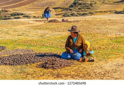 CHINCHERO, PERU - JULY 25, 2018: Quechua indigenous people in the process of frost drying Andes mountain potatoes in Chinchero near Cusco, Peru.