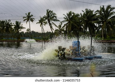 Chinchinim, Goa/India- July 29 2018: Manmade fish and prawn farming farms located in Goa which rear and breed fish and prawns/shrimps for local consumption and export