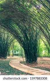 Chinese bamboo grove, wooden narrow meandering paths among bamboo bushes in the park, green grass outdoors