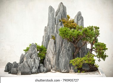 Chinese bonsai, located in Suzhou, Jiangsu, China.