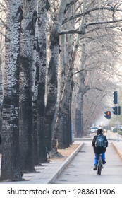 A chinese boy riding a bicycle on a pathway to school alongside a row of trees on beijing street in the morning