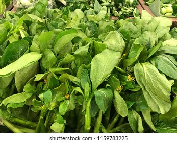 Chinese cabbage (bok choi, bok choy, choi sum, choy sum, pak choy, pak choi)