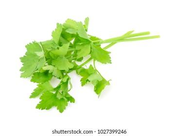 Chinese Celery isolated on white background