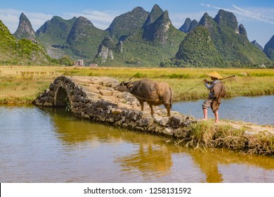 Chinese farmer with water buffalo on stone bridge in picturesque valley surrounded by karst limestone hills in Huixian, China, near Guilin.
