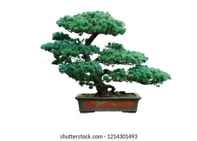 Chinese garden bonsai art