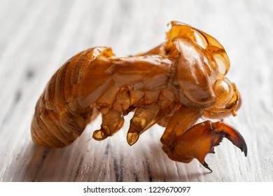 Chinese herb of Cicadae Periostracum or Cicada Slough close up